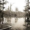 Cypress Swamp by Scott Pellegrin