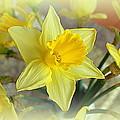 Daffodil by Bishopston Fine Art