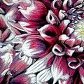 Dahlias In Pastel by Antonia Citrino