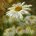 Daisies ... Again - P11at01 by Variance Collections