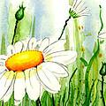 Daisy Field by Annie Troe
