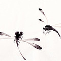 Dance Of The Dragonflies by Oiyee At Oystudio