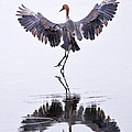 Dancing On Water by Robert Jensen