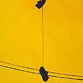 Dangling Souls by Michael Ciccotello
