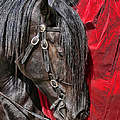 Dark Horse Against Red Dress by Jennie Marie Schell