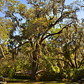 De Leon Springs - Classic Old Florida by Christine Till