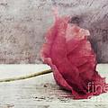 Decor Poppy Horizontal by Priska Wettstein