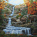 Deer Painting - Tranquil Deer Cove by Crista Forest