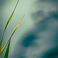 Dew Drop by Bob Orsillo