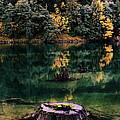 Diablo Lake Tree Stump by Benjamin Yeager