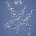 Dictyopteris barberi Print by Aged Pixel