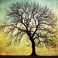 Digital Art Tree Silhouette by Natalie Kinnear