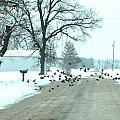 Disturbing The Flock by Julie Dant