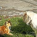 Dog And Cat Discuss by Artist and Photographer Laura Wrede