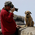 Dog Being Photographed by Terri Waters