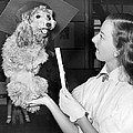 Dog Graduates From School by Underwood Archives