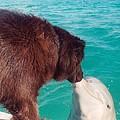 Dog Kissing Dolphin