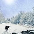 Dog Looking Back by Amanda Elwell