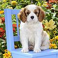 Dog On Blue Chair by Greg Cuddiford