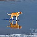 Dog on Water Mirror