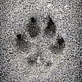 Dog Paw Print In Sand by Elena Elisseeva
