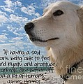 Doggie Soul Print by Peggy J Hughes