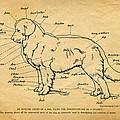 Doggy Diagram by Tom Mc Nemar