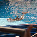 Dolphin Show - National Aquarium In Baltimore Md - 1212104 by DC Photographer