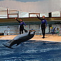 Dolphin Show - National Aquarium In Baltimore Md - 1212139 by DC Photographer