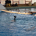 Dolphin Show - National Aquarium In Baltimore Md - 1212142 by DC Photographer