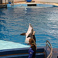 Dolphin Show - National Aquarium In Baltimore Md - 1212145 by DC Photographer