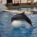 Dolphin Show - National Aquarium In Baltimore Md - 1212160 by DC Photographer