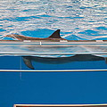 Dolphin Show - National Aquarium In Baltimore Md - 1212173 by DC Photographer