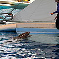Dolphin Show - National Aquarium In Baltimore Md - 1212195 by DC Photographer