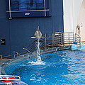 Dolphin Show - National Aquarium In Baltimore Md - 1212200 by DC Photographer