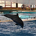 Dolphin Show - National Aquarium In Baltimore Md - 1212215 by DC Photographer
