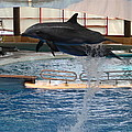 Dolphin Show - National Aquarium In Baltimore Md - 1212249 by DC Photographer