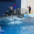 Dolphin Show - National Aquarium In Baltimore Md - 121292 by DC Photographer