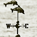Dolphins Weathervane In Sepia by Ben and Raisa Gertsberg