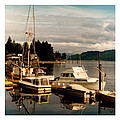 Domino At Alderbrook On Hood Canal by Jack Pumphrey