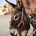 Donkey by Jelena Jovanovic
