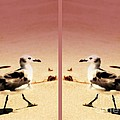 Double Gulls Collage by Susanne Van Hulst