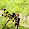 Dragonfly Eating Breakfast by Andee Design