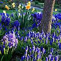 Dreaming Of Spring by Carol Groenen