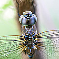 Dreaming With A Dragonfly by Scotts Scapes