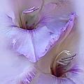 Dreams Of Purple Gladiola Flowers by Jennie Marie Schell