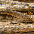 Driftwood 1 by Adam Romanowicz