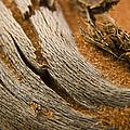 Driftwood 2 by Adam Romanowicz