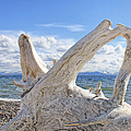 Driftwood at Yellowstone Lake