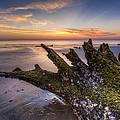 Driftwood On The Beach by Debra and Dave Vanderlaan